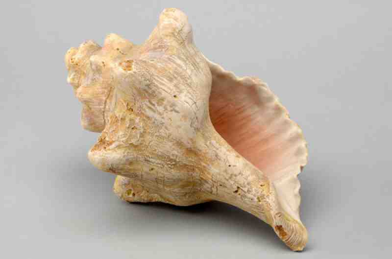 the meaning of the shell lord In the universe until he cracks his shell and uses the pieces to form the world   in building a waʻa (canoe), kāne is invoked, while kanaloa, lord of ocean.